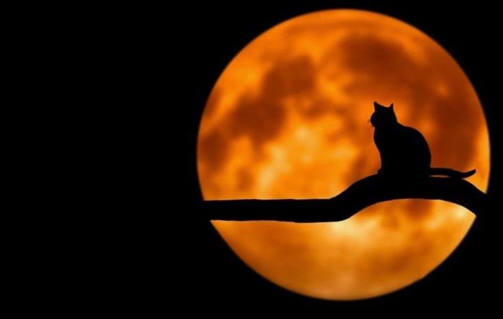 Black Cats & Cocktails - Halloween Yoga @ Trax Outdoor Center | Fairbanks | Alaska | United States